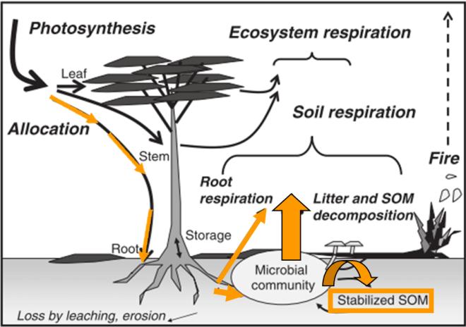 Resultado de imagen de respiracion del suelo forestal