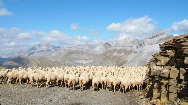 Curso avanzado sobre ganadería y cambio climático: Evaluación de emisiones, opciones de mitigación y estrategias deadaptación